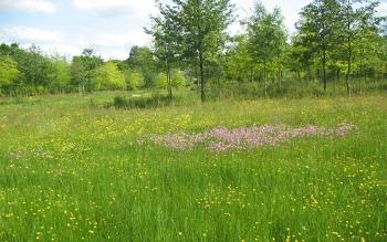 Prairie naturelle au perc équestre de Lamballe-Armor