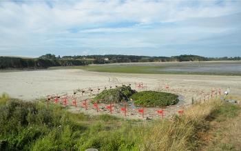 Ramassage des algues à Lamballe Terre & Mer